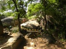 Bangalore, Karnataka, la India - 2 de junio de 2009 las plantas verdes y los árboles en la roca del bugle parquean, Basavanagudi Imagen de archivo libre de regalías