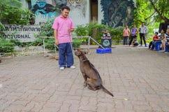 BANGKOK - 2. August 2014, Dusit-Ton-Hundeshow in Dusit-Zoo oder Ka Stockbild