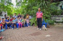 BANGKOK - 2. August 2014, Dusit-Ton-Hundeshow in Dusit-Zoo oder Ka Stockfotografie
