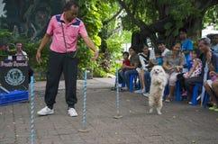 BANGKOK - 2. August 2014, Dusit-Ton-Hundeshow in Dusit-Zoo oder Ka Lizenzfreies Stockbild