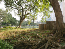 Bangkok park in the city with big tree Royalty Free Stock Photography