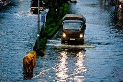Bangkok subacquea fotografie stock libere da diritti