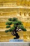 Bangkok (Tailandia), bonsai Immagini Stock Libere da Diritti