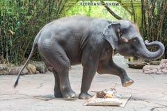 BANGKOK, TAILANDIA - 31 DE MARZO: El elefante da masajes a una hembra Fotografía de archivo