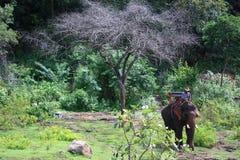 Bangkok Tailandia 5 de septiembre de 2008 Elephat y su amo Fotografía de archivo libre de regalías