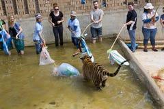 BANGKOK, TAILANDIA - FEBBRAIO 2014: La gente con il tempio della tigre Fotografie Stock