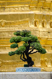 Bangkok (Tajlandia), bonsai Obrazy Royalty Free