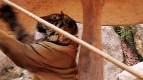 BANGKOK, THAÏLANDE - FÉVRIER 2014 : Les gens avec le temple de tigre clips vidéos