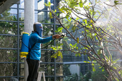 Bangkok, THAÏLANDE - 29 novembre : Jardinier d'homme à l'aide d'un pulvérisateur pour Images libres de droits