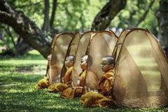 Many novices are meditating under a big tree. royalty free stock photo