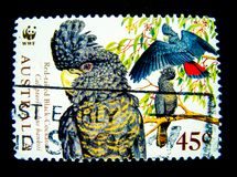 A stamp printed in Australia shows an image of red tailed black cockatoo bird on value at 45 cent. stock photography