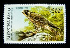 A stamp printed in Burkina Faso shows an image of Falco Peregrinus bird. BANGKOK, THAILAND. – On June 2, 2018 - A stamp printed in Burkina Faso shows an image Royalty Free Stock Photos