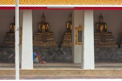 Bangkok, Thailand - 29. April 2014 Mann, der vor goldenen Buddha-Skulpturen bei Wat Pho, Bangkok stillsteht und betet stockbild