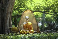 Novices are meditating under a big tree. stock photography