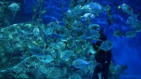 BANGKOK, THAILAND - 18 de Duiker voedende vissen van DECEMBER 2018 in aquarium Anonieme persoon met duikermateriaal het voeden stock video