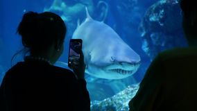 BANGKOK, THAILAND - 18 DECEMBER 2018 Anonymous tourists taking picture of shark. Back view of two people using. Smartphone to take photo of shark inside stock video footage