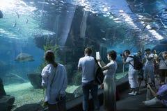 Bangkok Thailand 4 december 2014 - underwater world at siam ocea stock photo