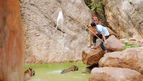 BANGKOK, THAILAND - FEBRUAR 2014: Leute mit Tigertempel stock footage