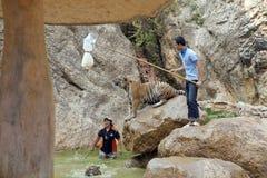 BANGKOK THAILAND - FEBRUARI 2014: Folk med tigertemplet Arkivfoto