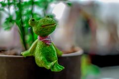 Bangkok,Thailand Febuary  2,2019 Frog dolls that are sold in Thailand stock photo