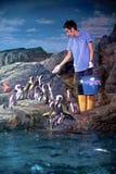 Penguin feeding stock photo