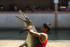 Bangkok, Thailand - January 3: Crocodile show stock photo