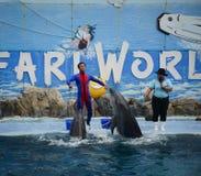 Dolphins on creative entertaining show. Bangkok, Thailand - Jun 16, 2016. A dolphin show at Safari World in Bangkok, Thailand. Safari World consists of two parks Stock Photos
