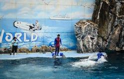 Dolphins on creative entertaining show. Bangkok, Thailand - Jun 16, 2016. A dolphin show at Safari World in Bangkok, Thailand. Safari World was opened in 1988 Royalty Free Stock Image