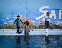 Dolphins on creative entertaining show. Bangkok, Thailand - Jun 16, 2016. The dolphin trainer and her dolphin are ready to impress the audience with a specular Royalty Free Stock Images