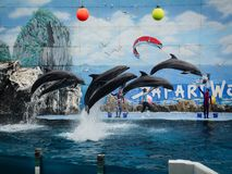 Dolphins on creative entertaining show. Bangkok, Thailand - Jun 16, 2016. Dolphins are ready to impress the audience with a specular show at Safari World in Stock Photo