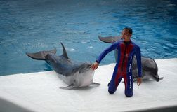 Dolphins on creative entertaining show. Bangkok, Thailand - Jun 16, 2016. A trainer with dolphins in show at Safari World in Bangkok, Thailand. Safari World was Stock Photo