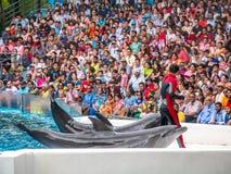BANGKOK THAILAND - JUNI 16,2018: Delfinshowen på safarivärlden Den mest intelligenta expertis- och trickshowen Safari World är be Royaltyfria Bilder