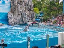 BANGKOK THAILAND - JUNI 16,2018: Delfinshowen på safarivärlden Den mest intelligenta expertis- och trickshowen Safari World är be arkivfoton