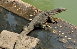 Bangkok, Thailand: Komodo Dragon Royalty Free Stock Photo