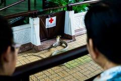 Bangkok/Thailand - 11. Mai 2018: Mann eine Schlangen-Show durchführend und bei Serpentarium, thailändische Gesellschaft des roten lizenzfreie stockfotografie
