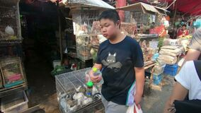 Bangkok, Thailand - March 11, 2017 : Rabbit and Chicken for sell in animal zone at Chatuchak, the biggest weekend market in South. East Asia stock video footage