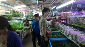 Bangkok Thailand - mars 11, 2017: Akvariefisk i fishmarket på den Jatujak eller Chatuchak helgmarknaden stock video