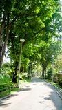 BANGKOK THAILAND - MARS 11, 2017: En gåväg- och gräsplanskog Arkivbilder