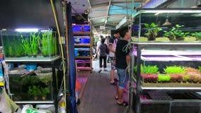Bangkok Thailand - mars 11, 2017: Fishmarket på den Jatujak eller Chatuchak helgmarknaden i Bangkok lager videofilmer