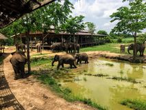 Any rescue elephants roaming the grounds of ElephantsWorld outside of Kanchanaburi Thailand stock images