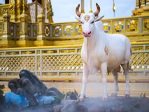 Mythical creatures of Himvanta. Bangkok Thailand, November 11, 2017 : Cow-like mythical creatures of Himvanta around The Royal crematorium of King Rama IV Stock Photo