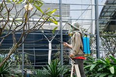 Bangkok,THAILAND - November 29: Man gardener using a sprayer for Stock Images