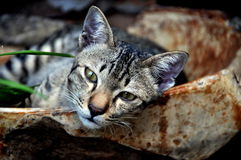 Bangkok, Thailand: Sleepy Cat Stock Image