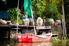 Bangkok thonburi klongs - canals view. Beautiful view on Bangkok thonburi klongs - exploring the canals on a long-tail boat stock photo