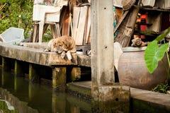 Bangkok thonburi klongs - canals view Stock Photo