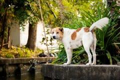 Bangkok thonburi klongs - canals view Royalty Free Stock Photography