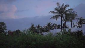 Bangkok traffic jam. Beautiful sunrise in Phuket, Thailand, palms and sky stock video footage