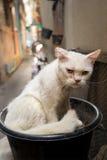 Bangkok  wild cat living in the street.  Stock Image