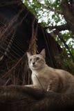 Bangkok  wild cat living in the street.  Stock Photo