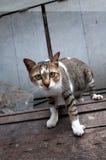 Bangkok  wild cat living in the street.  Royalty Free Stock Photos